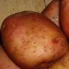 Відмінний смак і висока врожайність - картопля «іллінський»: опис сорту, характеристика, фото