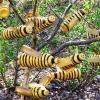 Бджоли з пластикової пляшки на дачній ділянці