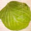 Харчові, дієтичні і лікувальні властивості капусти
