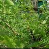 Плоди і ягоди 2014 року в саду казанина геннадія на півдні західної сибіру