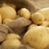 Чому не росте картопля?