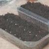 Грунтові суміші для вирощування розсади, їх склад та якість