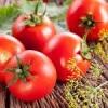 Підживлення для помідорів