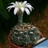 У кого-небудь є такі квіти - фрезії? У них приємний аромат і де ви їх купили?