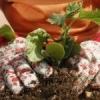 Правила внесення органічних добрив
