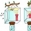 Превентивні заходи або як боротися з травневим жуком на ділянці і полуниці?