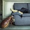 Профілактика зараження в домашніх умовах: що робити, якщо у сусідів клопи?