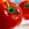 Простий сорт томата «алпатьєва 905 а»: характеристика і опис помідор, фото дозрілих плодів, особливості вирощування