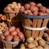 Перевірений часом картопля «троянда»: опис сорту, фото, характеристика