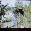 Птах на моєму дачній паркані