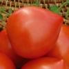 Ранньостиглий томат «хали-гали»: характеристика і опис сорту, вирощування, фото плодів