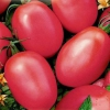 Ранній урожай вам подарує томат «травнева троянда»: опис і особливості сорту