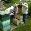 Розширення гнізда бджіл
