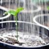 Розповімо як часто поливати розсаду перцю і баклажанів: ідеальний склад і температура води, режим поливу насіння, молодих пагонів і зміцнілих саджанців