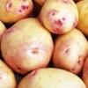 Різноманітний картопля «лимонка»: опис сорту, фото, характеристика