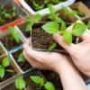 Реальна задача в наші дні - посадка перцю на розсаду на уралі: як і коли садити, всі нюанси