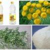 Рецепти народних засобів від клопів в домашніх умовах: ефірні масла, борна кислота, скипидар і гас