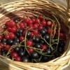 Сад в липні, роботи з фруктовими деревами і ягідниками