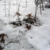 Сад взимку. Період зимового спокою. Життєдіяльність рослин в зимовий період