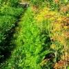 Садові посадки на штучних підвищеннях, їх перевага