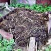 Секрети отримання високих врожаїв за допомогою застосування методик органічного природного землеробства
