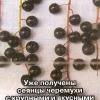З`їзд садівників россии по кісточкових культур, виступи на з`їзді, нове в селекції та акліматизації
