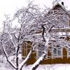 Сезонні роботи в січні для садівника і городника