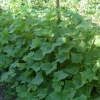 Шпалерна сітка для огірків