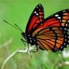 Символ метелики в фен-шуй - як його використовувати в інтер`єрі?