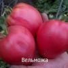 Компактний кущ, висока врожайність, відмінний товарний вигляд - це відмінні ознаки сорту томату «товсті щічки»