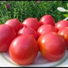Сорт помідор, відповідний для всієї нашої батьківщини - опис гібридного томата «червоний купол»