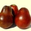 Сорт томата японський трюфель чорний - помідор з хорошою репутацією для вашої теплиці