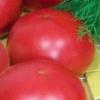 Сорт томата «картопляний малиновий» - опис з фото смачного пишного красеня на улюблених грядках