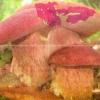 Способи розведення лісових грибів на садовій ділянці