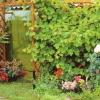 Будівництво шпалер для винограду своїми руками