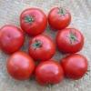 Теплолюбний гібрид і його фото - томат «рожевий король» f1: характеристика і опис сорту