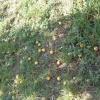 Тонкощі догляду за абрикосом