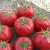 Дивно рівні за розміром томати «розаліза f1»: опис сорту, рекомендації по вирощуванню