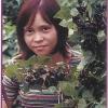 Догляд за смородиною в саду, боротьба з хворобами і шкідниками