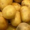 Урожайний і невимогливий картопля вр 808: опис сорту, його характеристика, фото