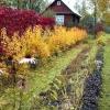 У чому полягає обробка землі восени?