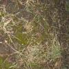 Весняна обробка газону