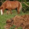 Види органічних добрив та їх внесення