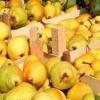 Вітаміни круглий рік: як зберігати груші на зиму в погребі?