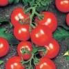 Смачний гість з голландії - сорт томата «річи» f1: опис і особливості вирощування