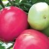 Смачний середньостиглий томат «малиновий захід f1»: опис сорту і особливості вирощування