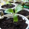 Вибираємо грядки для посіву зелені