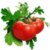Вибір любителів і професіоналів - томат тимофій f1: опис сорту, характеристики, поради по вирощуванню