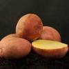 Вирощуємо картоплю журавинка: характеристика і опис сорту, фото