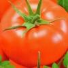 Вирощуємо улюблені томати «бабусин подарунок»: опис сорту і його характеристика